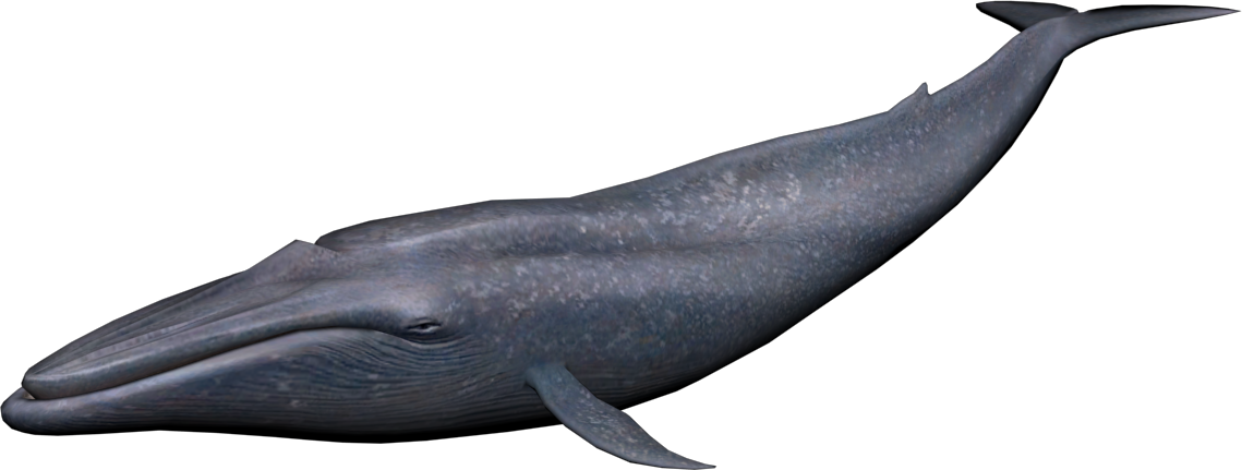 PNG HD Whale - 121900