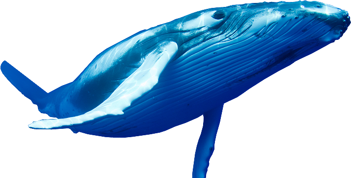 PNG HD Whale - 121896