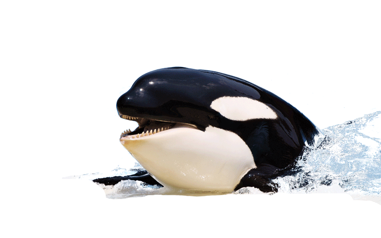 PNG HD Whale - 121899