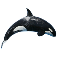 PNG HD Whale - 121893