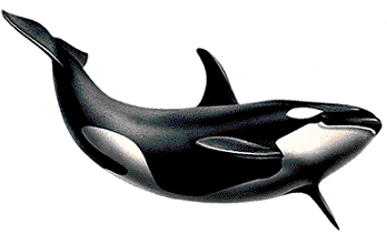 PNG HD Whale - 121892
