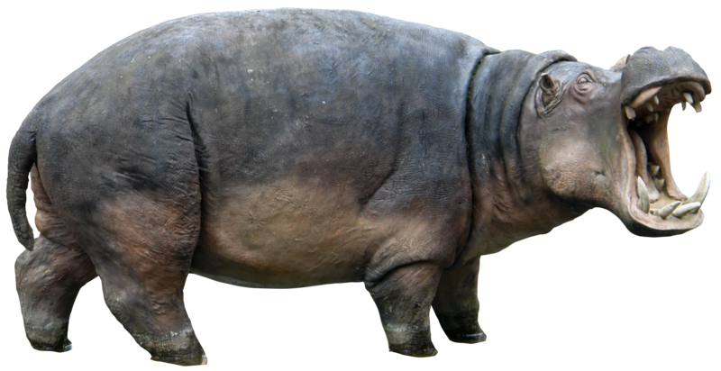 Download Hippopotamus PNG images transparent gallery. Advertisement - PNG Hippopotamus