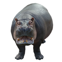 Hippopotamus Png Image PNG Image - PNG Hippopotamus