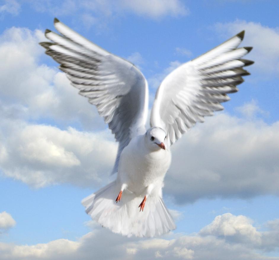 PNG Holy Spirit - 48451
