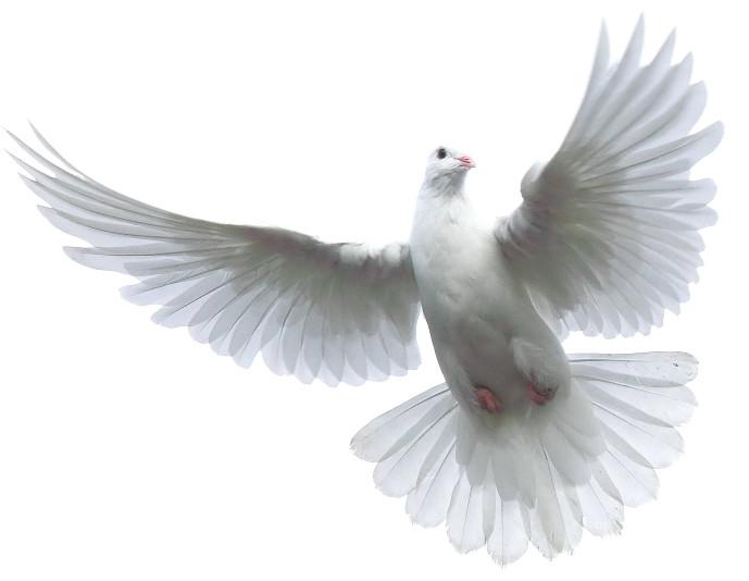 PNG Holy Spirit - 48444