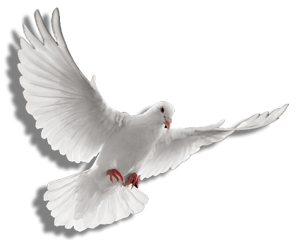 Holy spirit dove png - photo#2 - PNG Holy Spirit