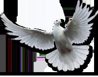 PNG Holy Spirit - 48456