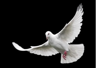 The Agency of the Holy Spirit - PNG Holy Spirit