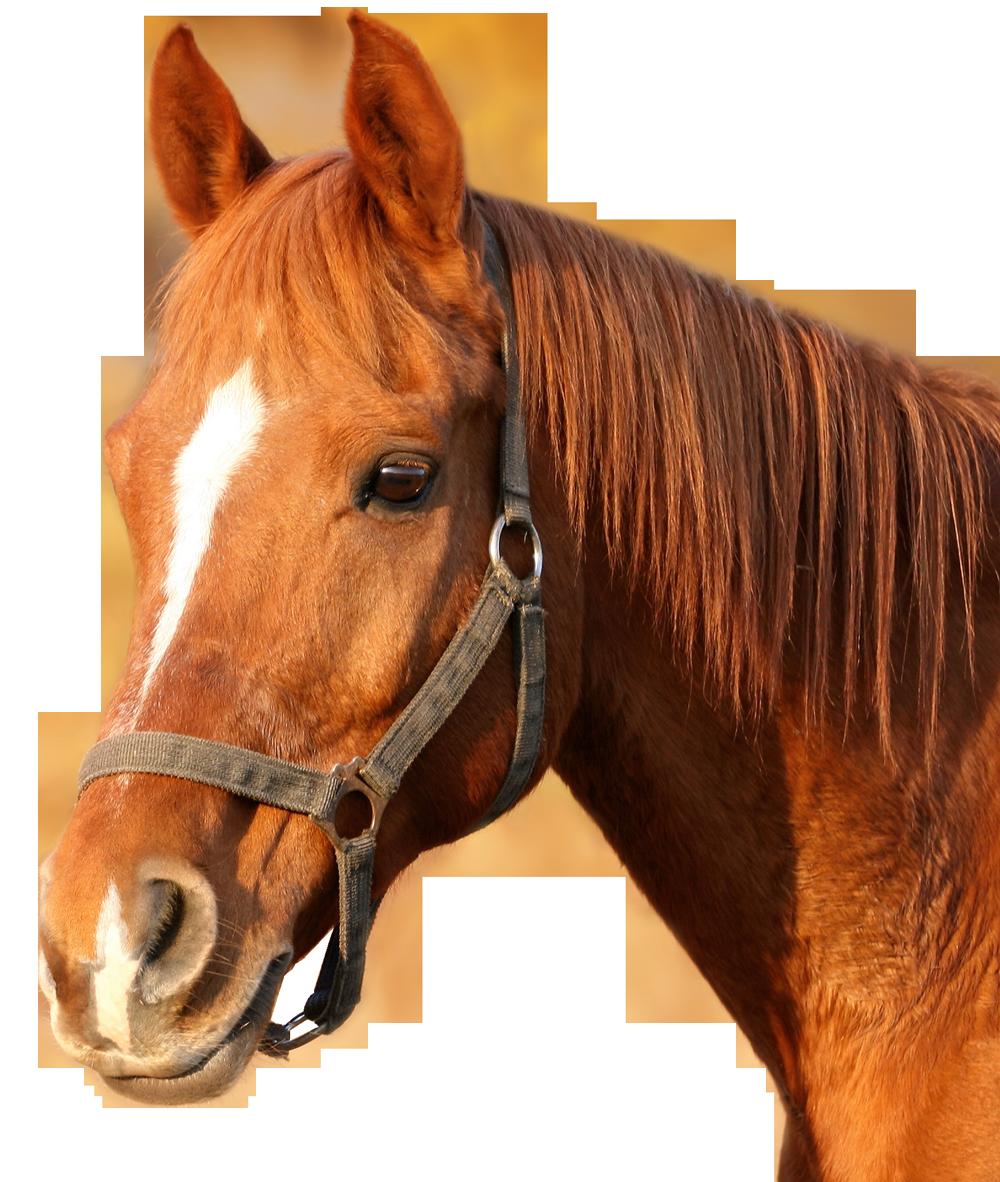 PNG Horse Head - 53280