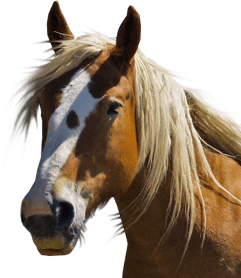 PNG Horse Head - 53286