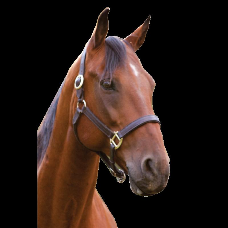horse-head - PNG Horse Head