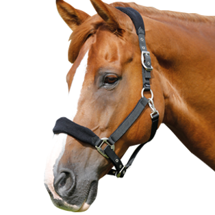 Horse head collars and lead ropes ideal for everyday or competition use. - PNG Horse Head
