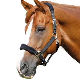 PNG Horse Head - 53287