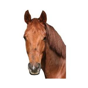 Horse Head Markings - PNG Horse Head