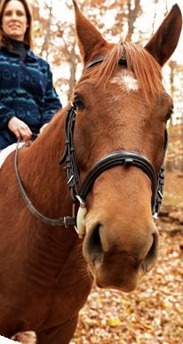 PNG Horse Head - 53284
