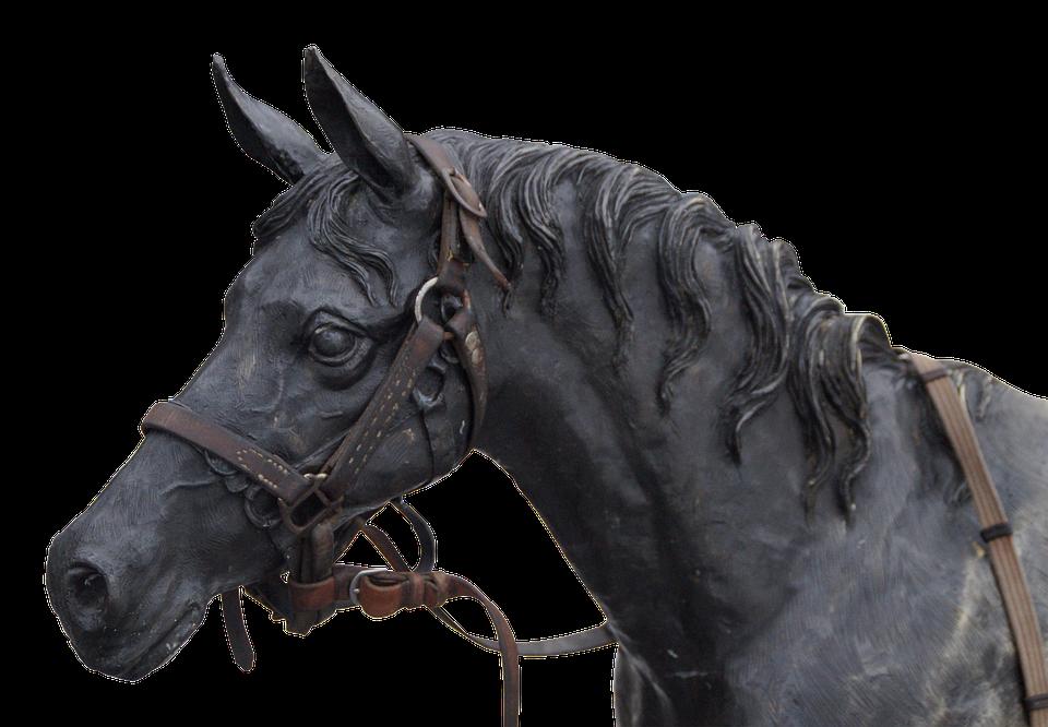 PNG Horse Head - 53288