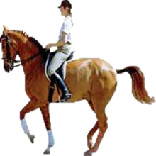 PNG Horse Riding - 69307