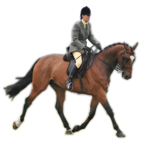 PNG Horse Riding - 69310