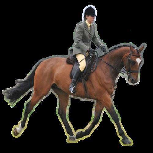 PNG Horse Riding-PlusPNG.com-500 - PNG Horse Riding