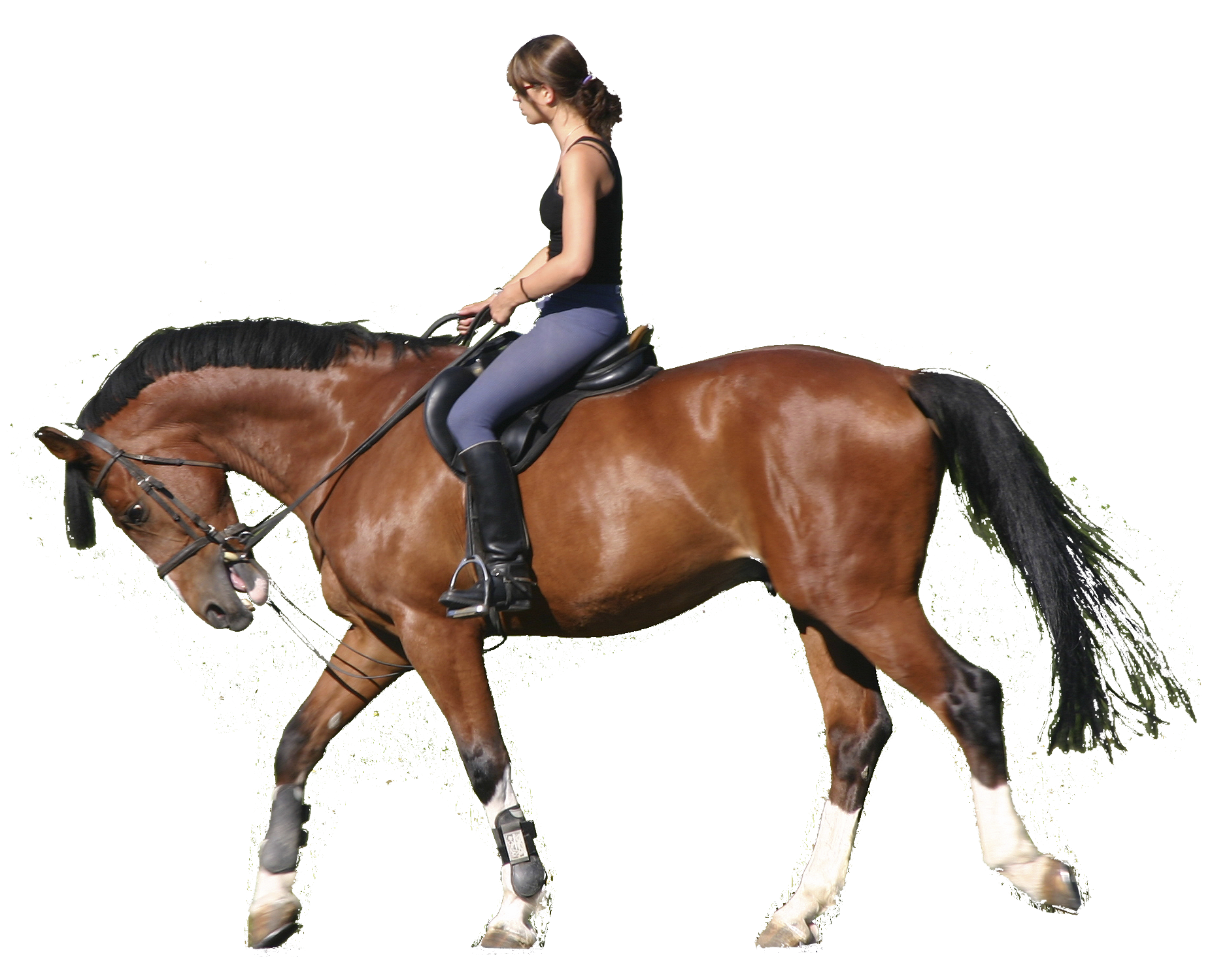 png horse riding transparent horse riding png images pluspng