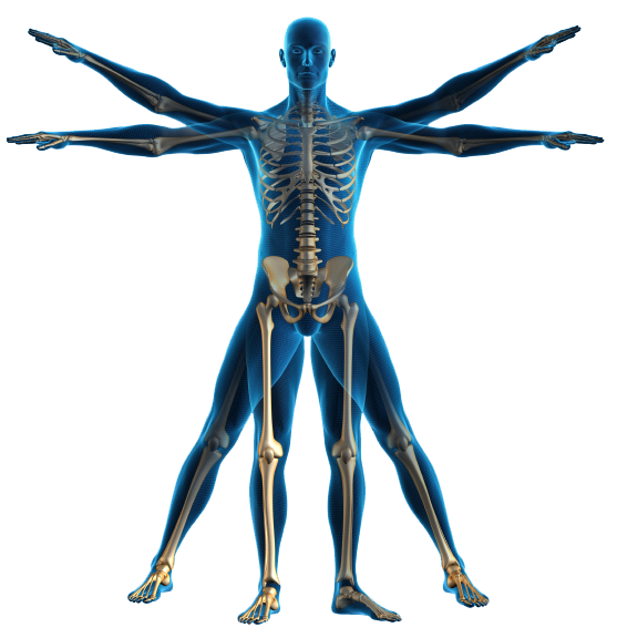 PNG Human Body Outline - 69398