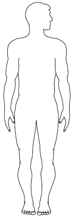 Match the body parts and their descriptions to the organs in the correct  place on the human body outline provided and label them with the  descriptions. - PNG Human Body Outline