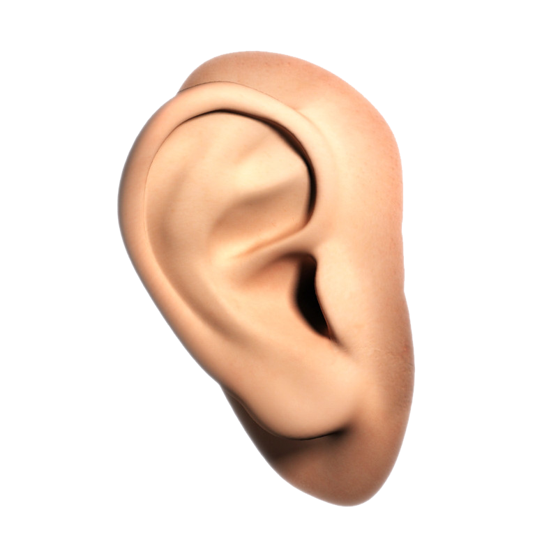 Ear PNG - PNG Human Nose