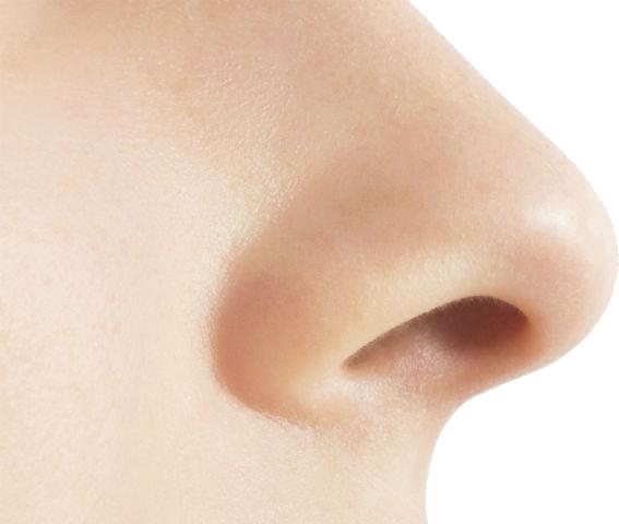 PNG Human Nose - 69783