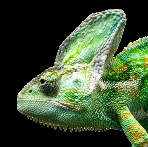 PNG Iguana - 47171