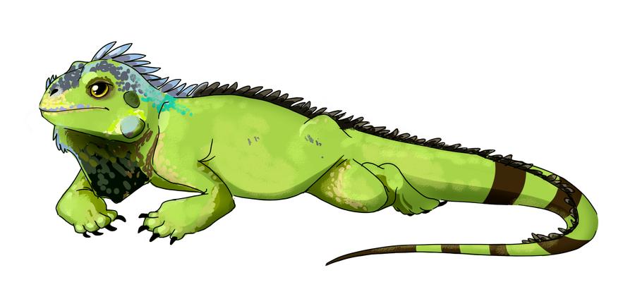 PNG Iguana - 47173