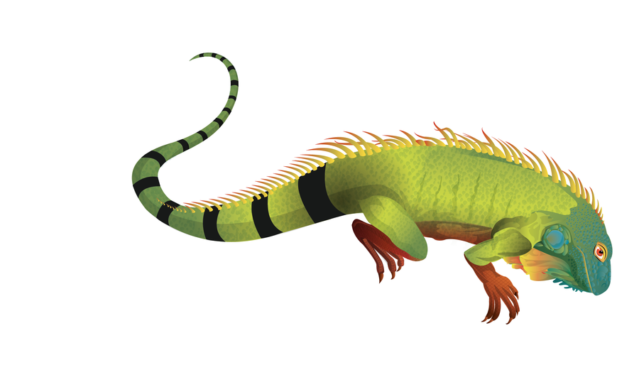 PNG Iguana - 47176