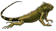PNG Iguana - 47174