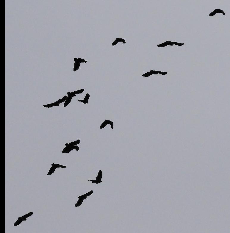 Birds Transparent Background - PNG Images