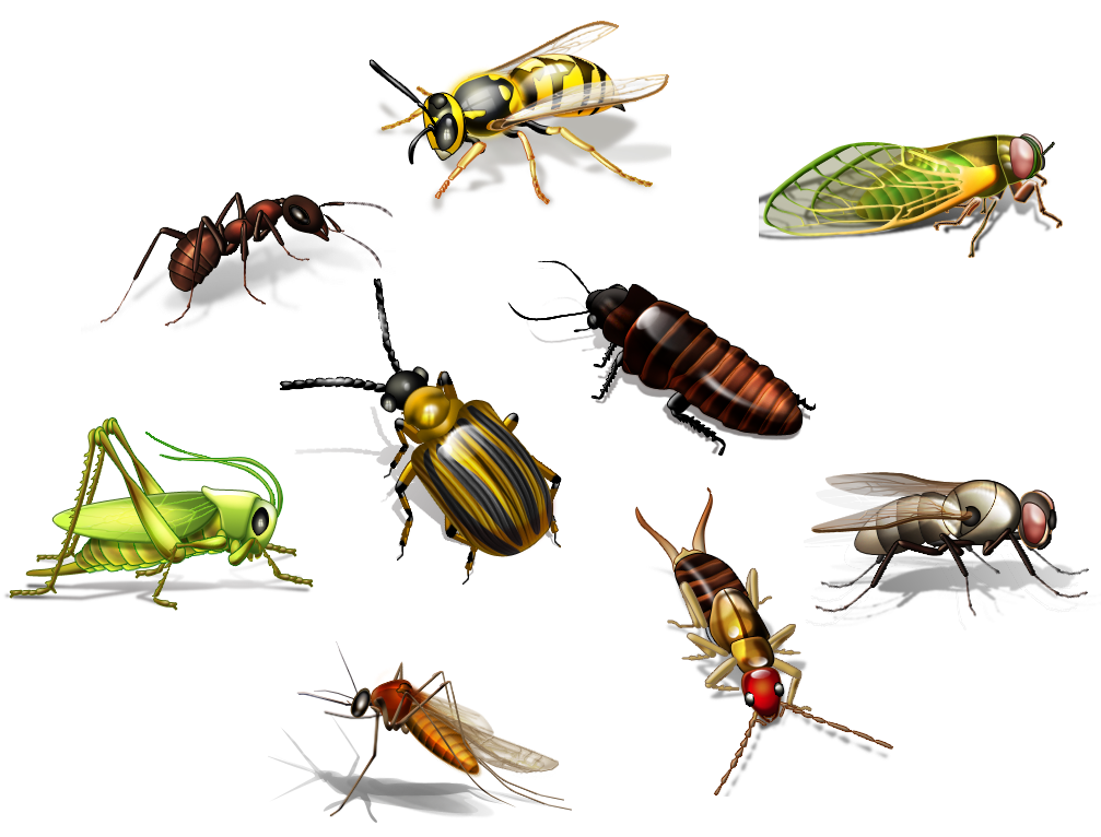 Two ways to choose your insects - PNG Insects