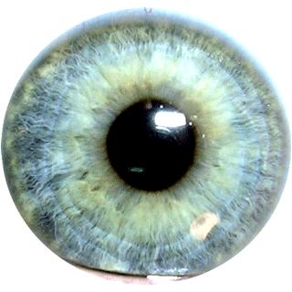 PNG Iris
