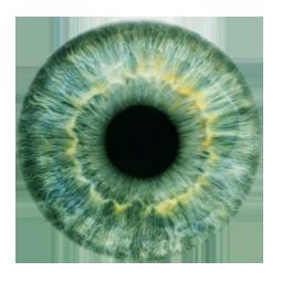 PNG Iris - 70154