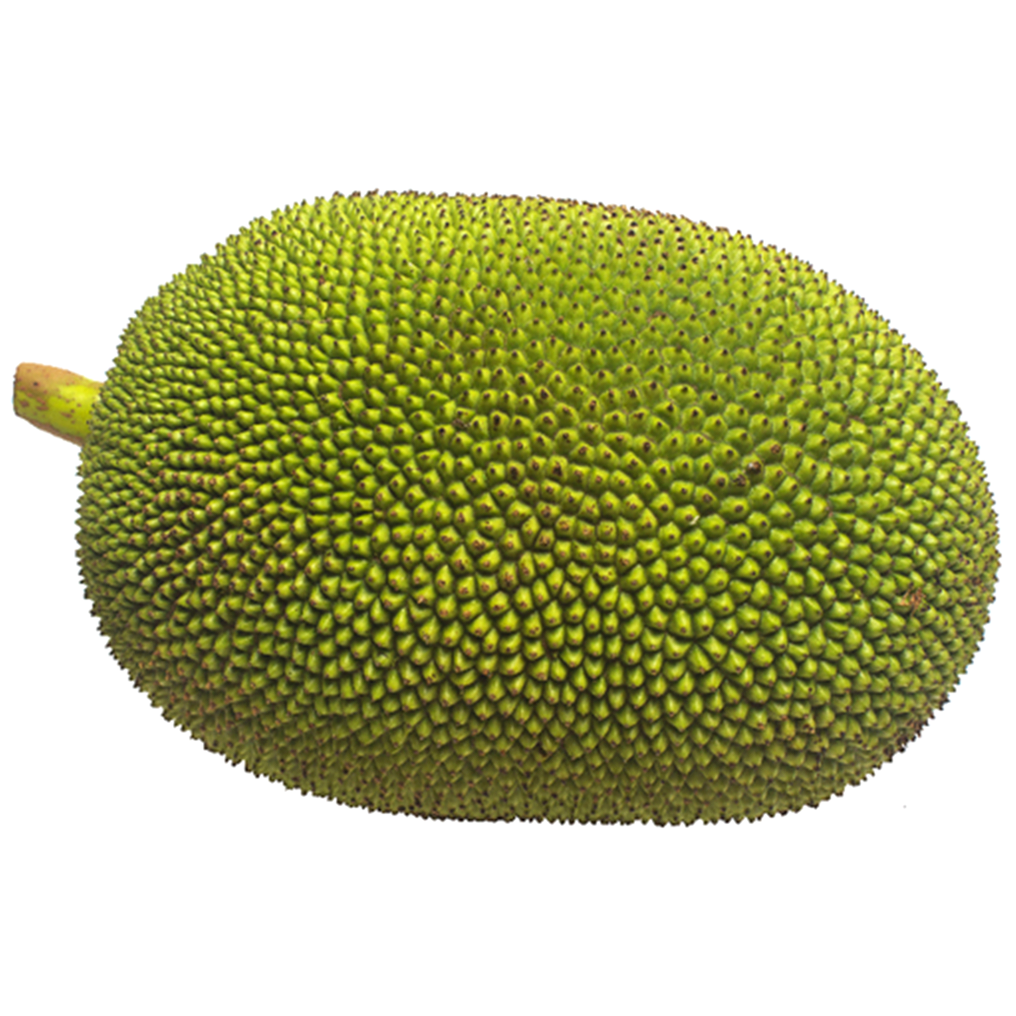 PNG Jackfruit - 70064