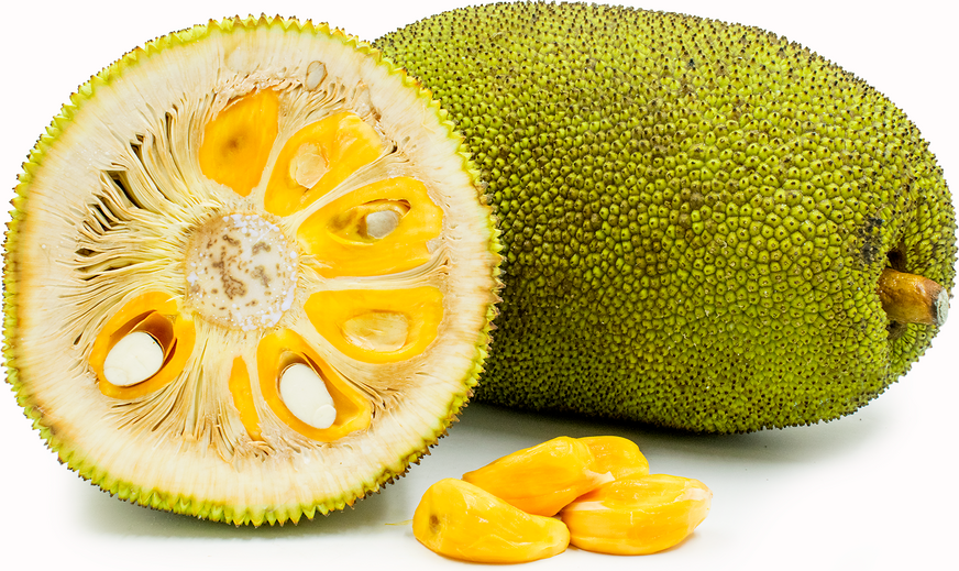PNG Jackfruit - 70067