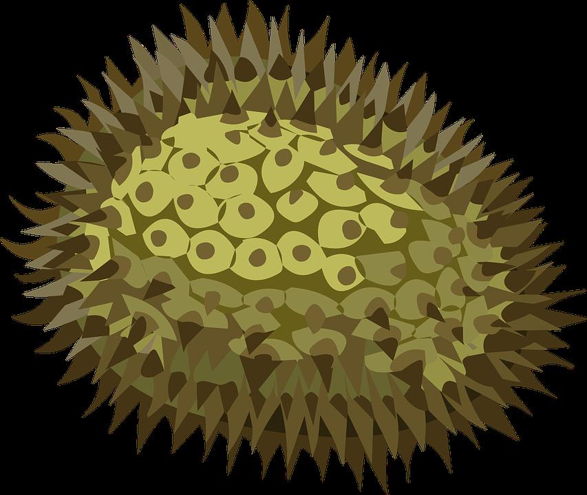 PNG Jackfruit - 70079