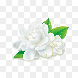 Jasmine, Jasmine, Flowers, Flower Element PNG Image - PNG Jasmine Flower