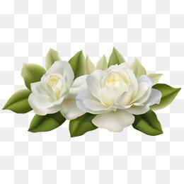 PNG Jasmine Flower - 68487