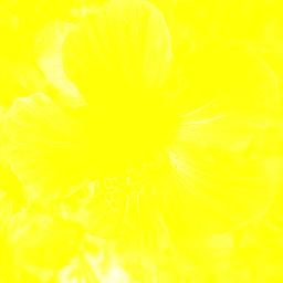 PNG Jaune - 49658