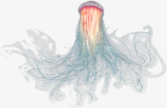 PNG Jellyfish - 48992