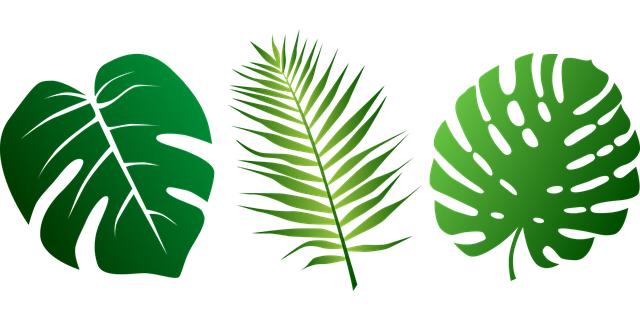 Free vector graphic: Leaves, Tropical, Palms, Plant - Free Image on Pixabay  - 2305515 - PNG Jungle Leaf
