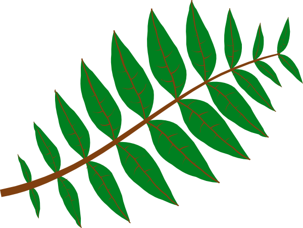 PNG Jungle Leaf Transparent Jungle Leaf.PNG Images. | PlusPNG