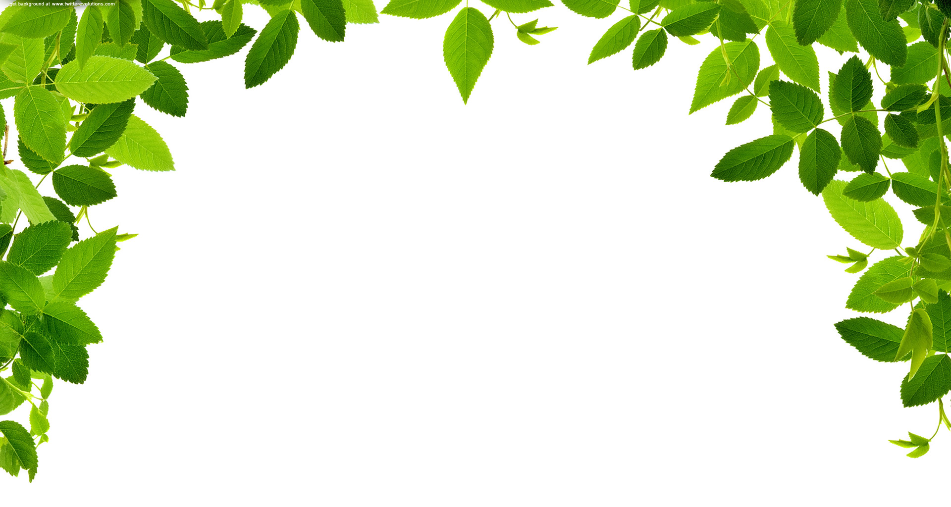 pin Foliage clipart jungle le
