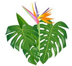 jungle leaves - Google Search - PNG Jungle Leaf