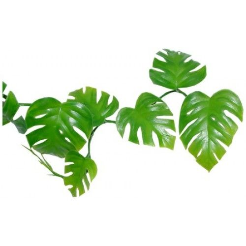 Green Leaves PNG Photos