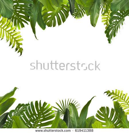 Tropical Jungle Leaves Background - PNG Jungle Leaf