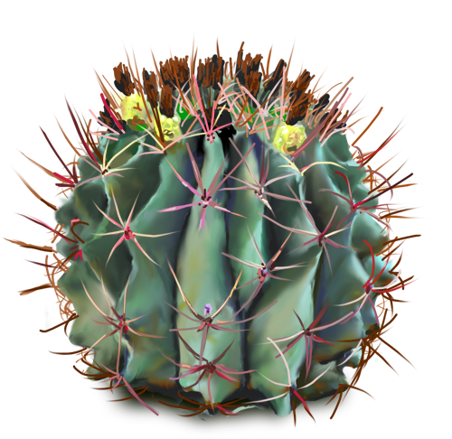 10 Free Plants u0026 Flowers PNG Images- at Dzzyn pluspng.com - Barrel Cactus - PNG Kaktus